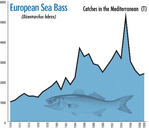 european sea bass
